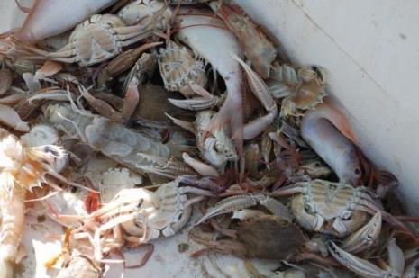 Balıkçılar çaresiz