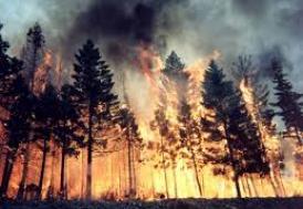 ABD'de orman yangını: 3 ölü