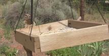 Kuşların yemine dadanan sincaba tuzak