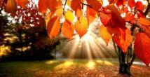 Mevsim Değişiklikleri Vücudumuzu Nasıl Etkiliyor?