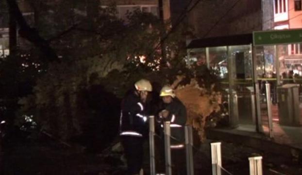 Devrilen ağaç kaldırıldı