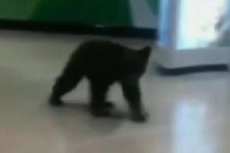 Yavru ayı alışveriş merkezine girdi